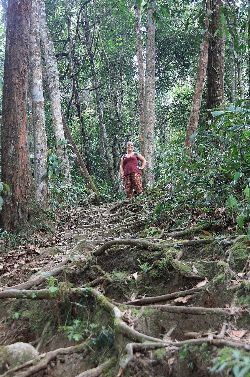Wilderness explorers 3