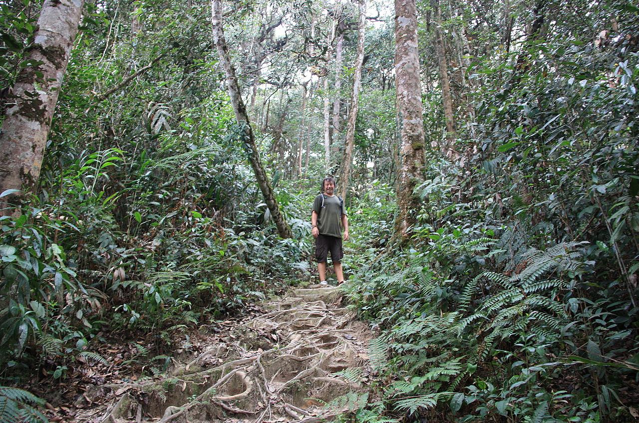 Wilderness explorers 4