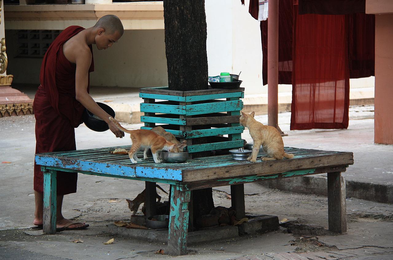 Feeding the Monastery cats