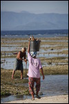 Guy and his wife building their seaweed farm.