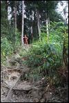 Wilderness explorers 2