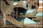 Spot the cat at the Pagoda!