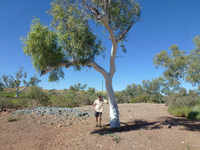 East of Roebourne creek again