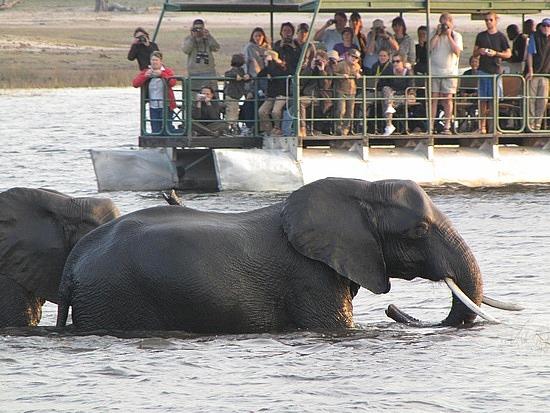 Elephants, Okavango Delta, Botswana.