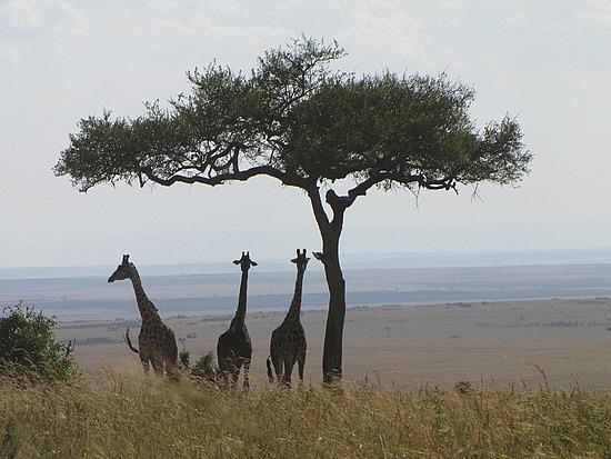 How magic is this? Masa Mari, Kenya.