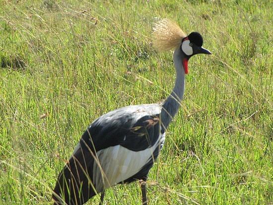 Love the head gear, Sergengeti, Tanzania.