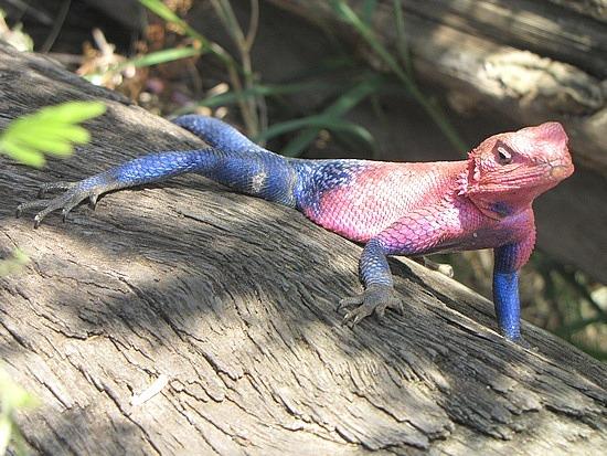 Colourful, Sergengeti, Tanzania.