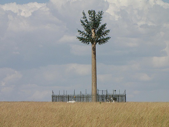 Not a tree but a mobile cell tower Masi Mara Kenya