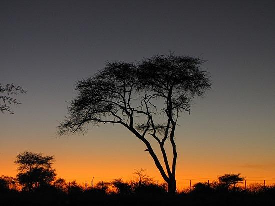 Sunrise at Etosha National Park, Namibia.