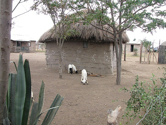 Typical mud hut