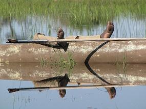 Hard day? Okavango Delta, Botswana.