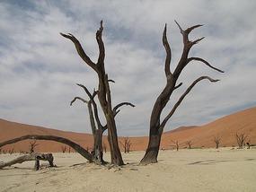 Dead Vlei, Sossusvlei, Namibia.