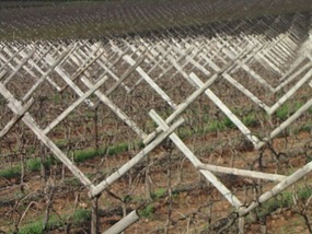 Kms of vineyards, South Africa.