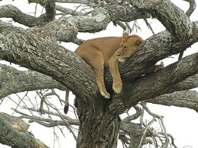 a place to have a snooze