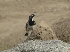 Bit of bird life