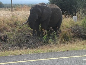 Road side diversion and first elephant sighted