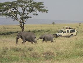 Vehicles & elephants all share same ground