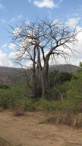Baobab Valley