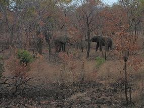elephants we saw