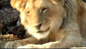 Click here 46 sec VIDEO