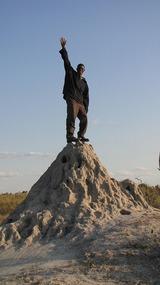 King of the termite mound