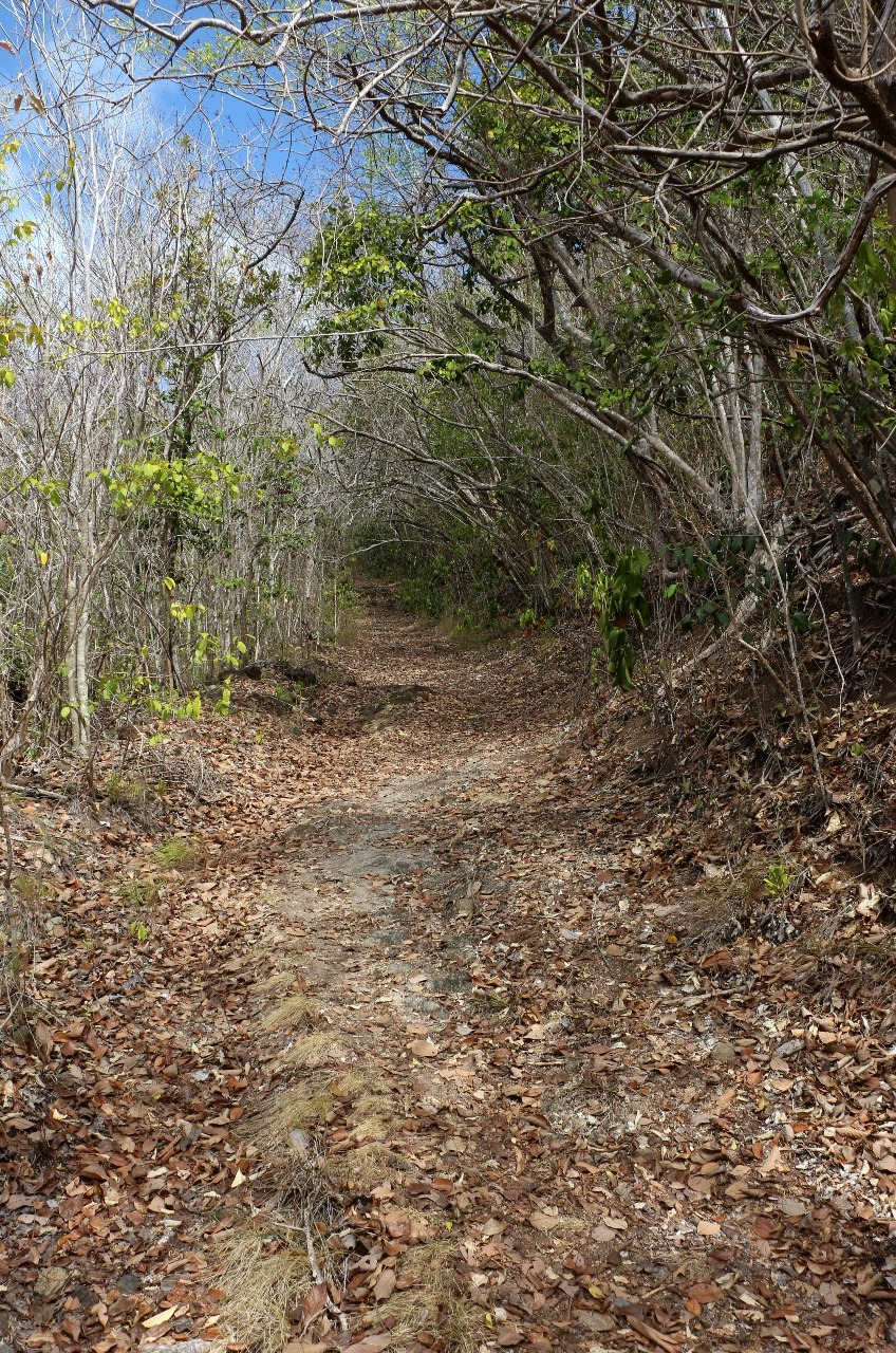 Another trail . . .Hope