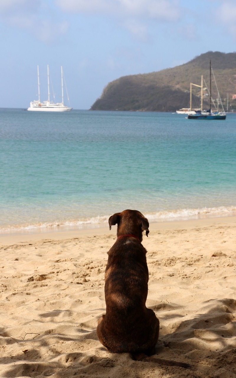 Dog Day afternoons at Lower Bay