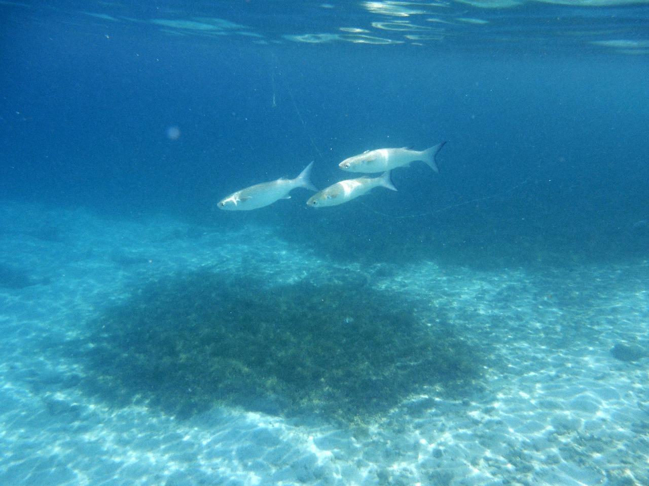 Snorkelling at Ocar