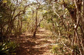 Trail to Bequia Head