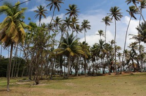 Spring Palms 1