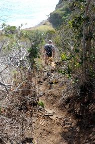 Path down to the beach