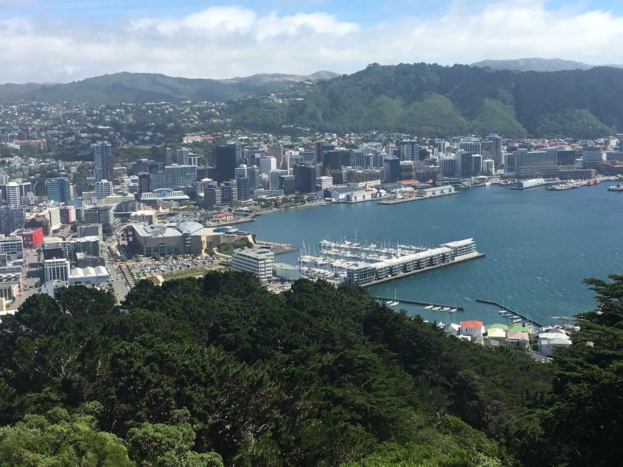 Wellington from Mt. Victoria