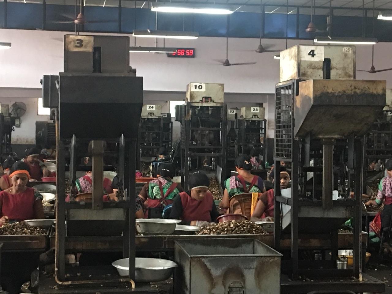 Women workers in Cashew Factory