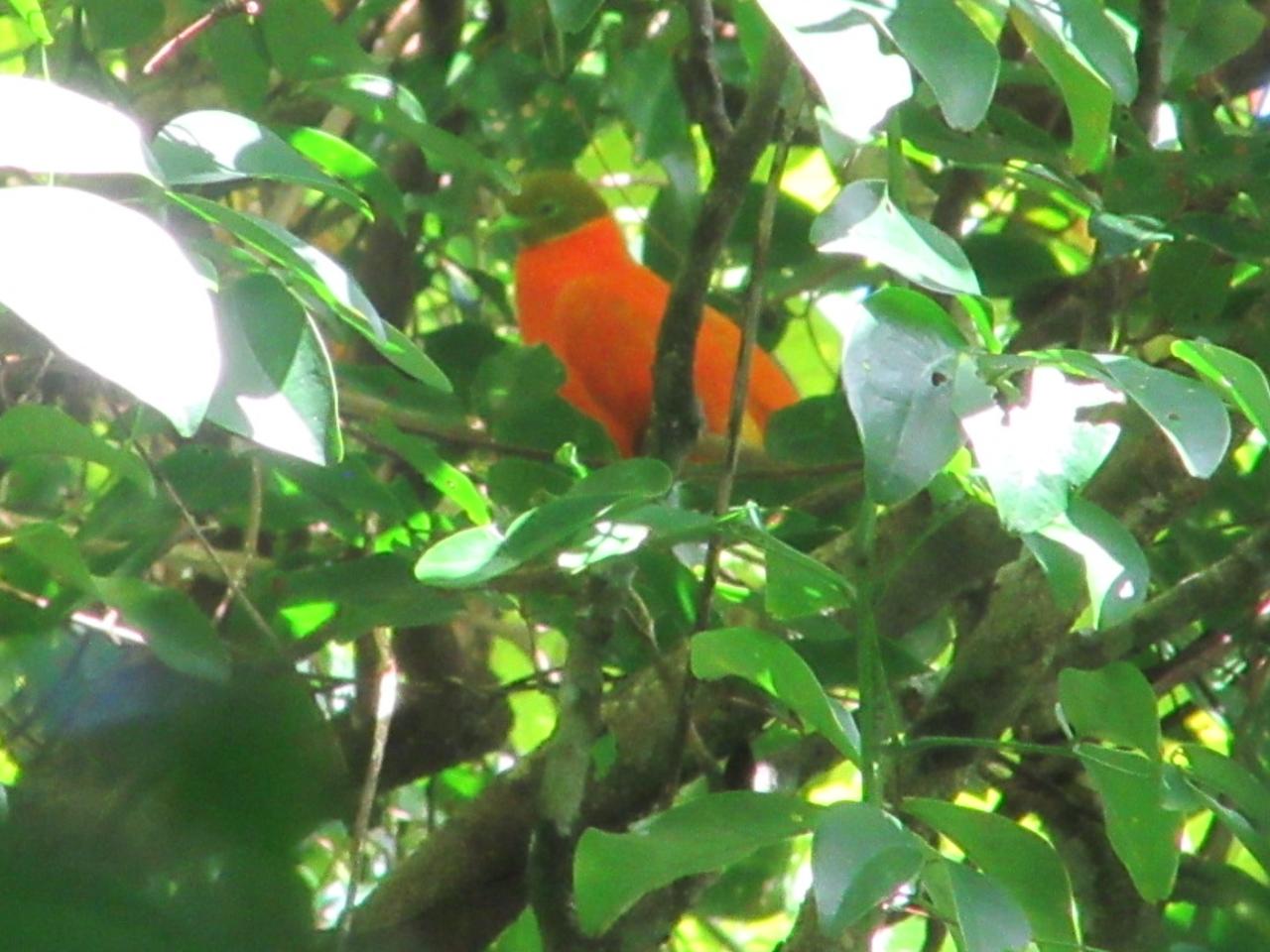 Fiji national bird