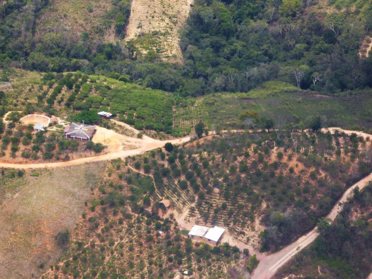 Palm tree plantations