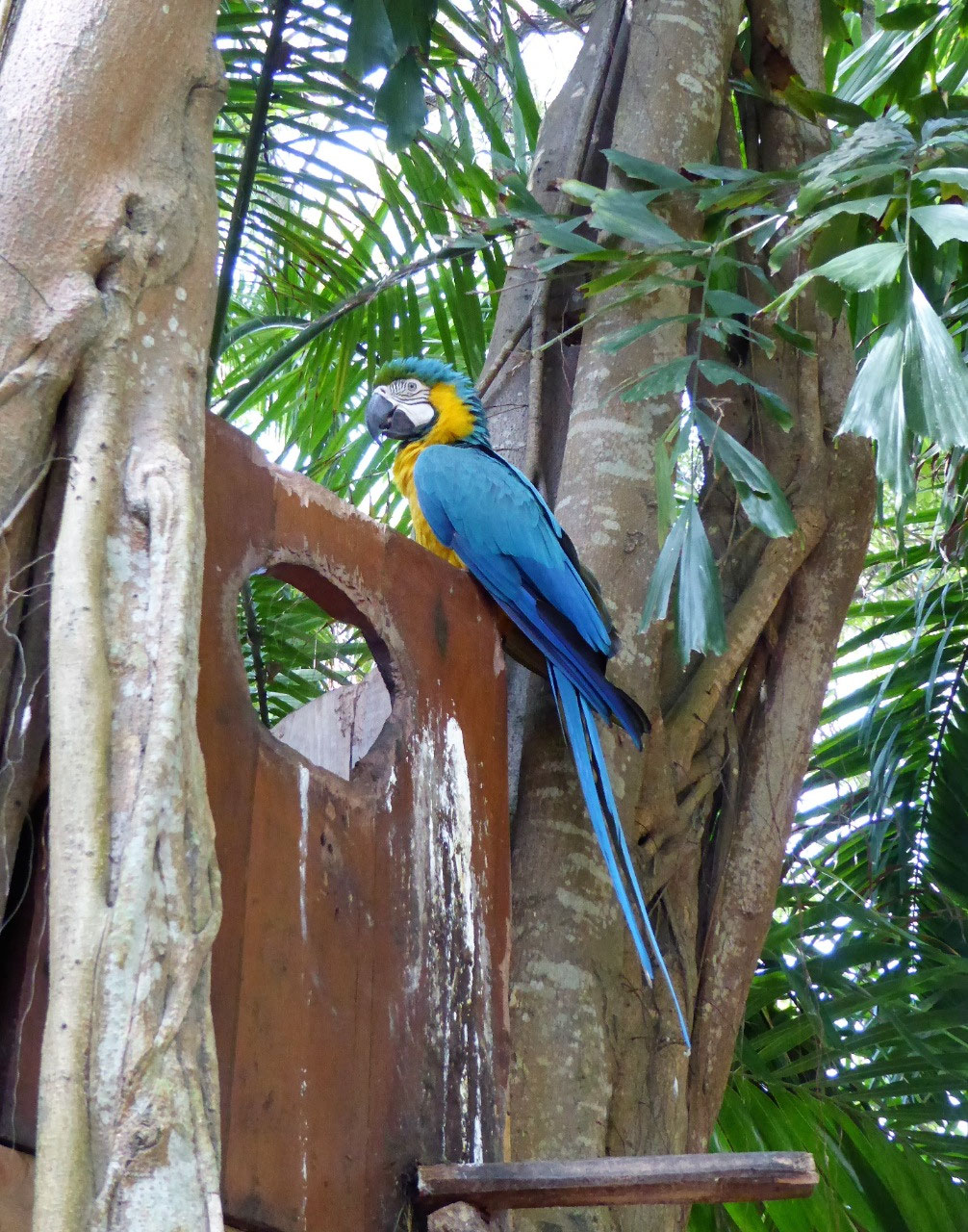 A beautiful macaw on the hotel grounds