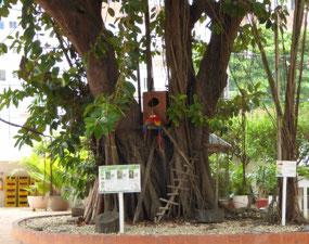 Guacamayas in the tree