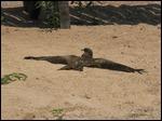 Sunbathing Kite