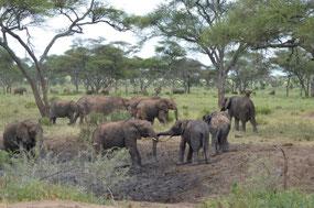 Elephants Everywhere