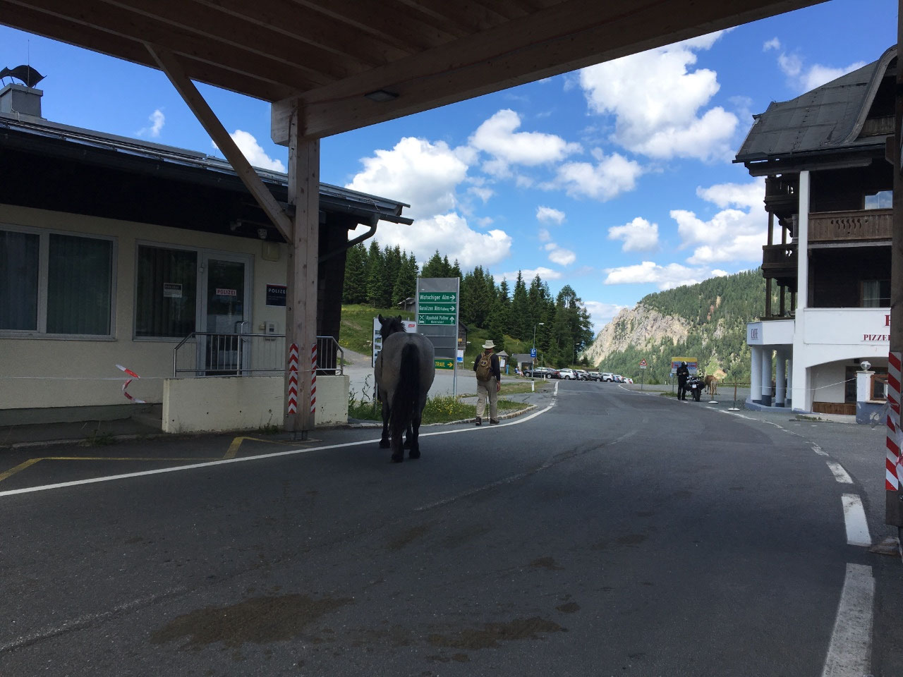 A horse checking in at the border crossing