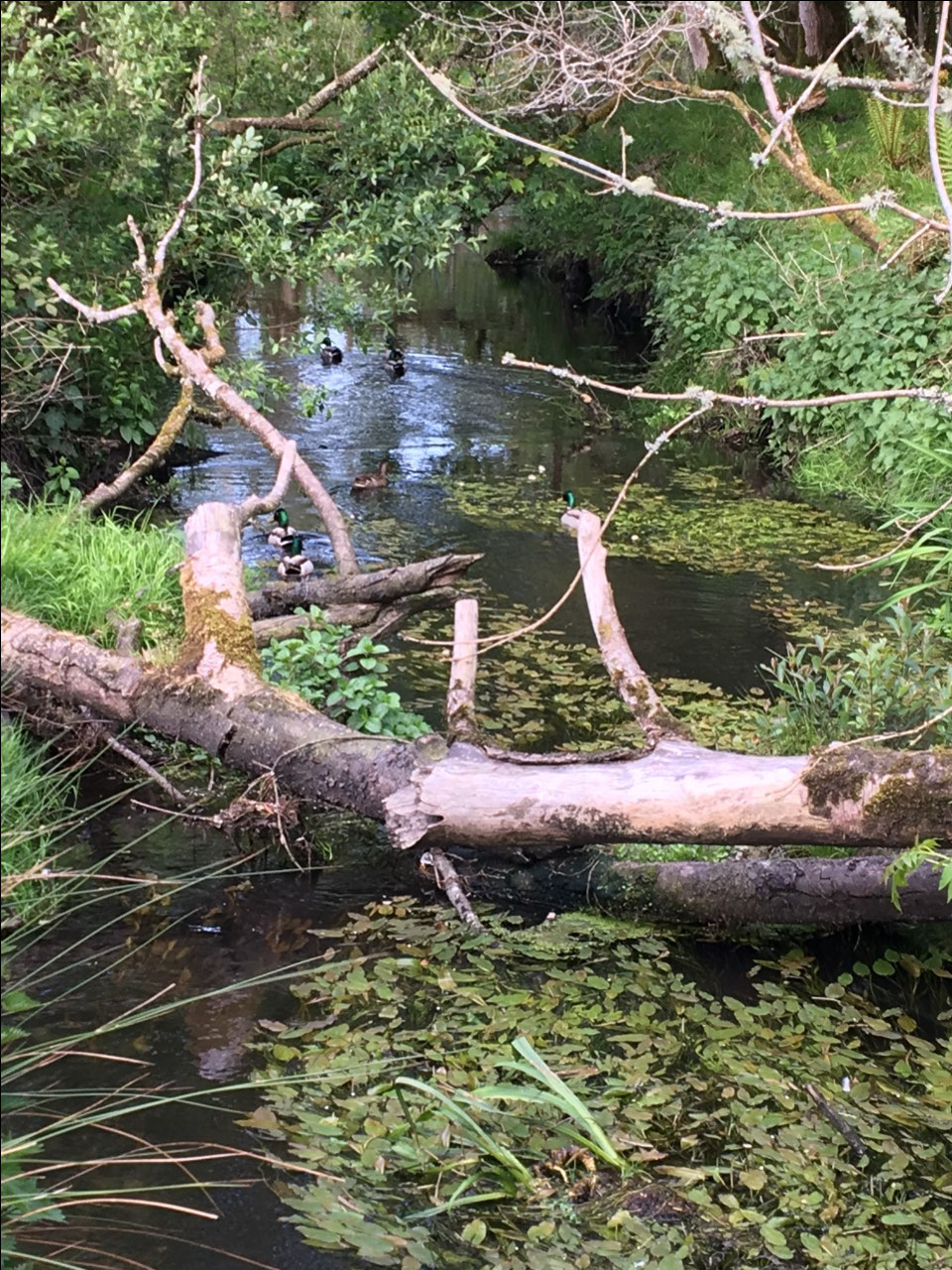 A brook in the park