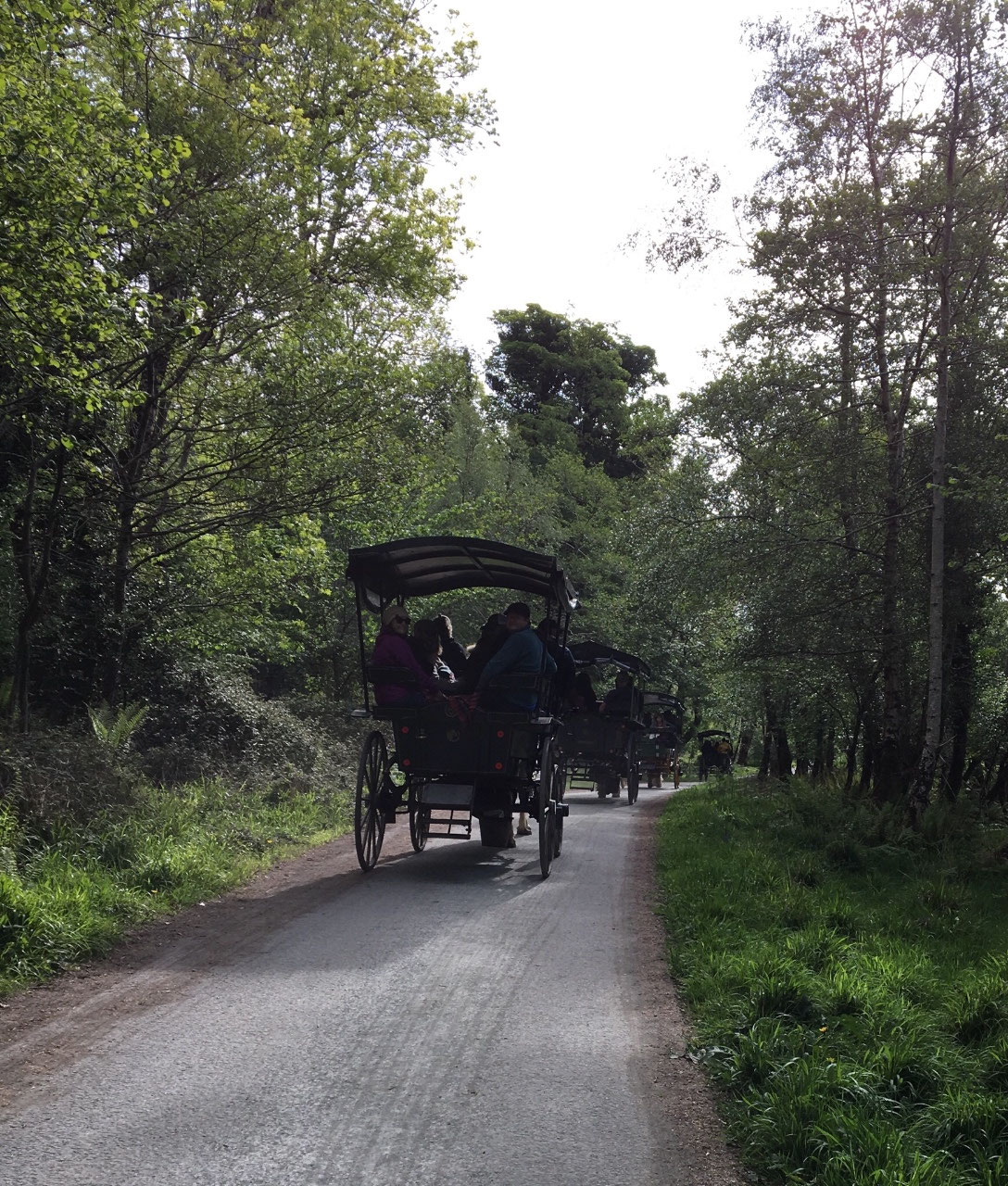 Jaunting carts in the park