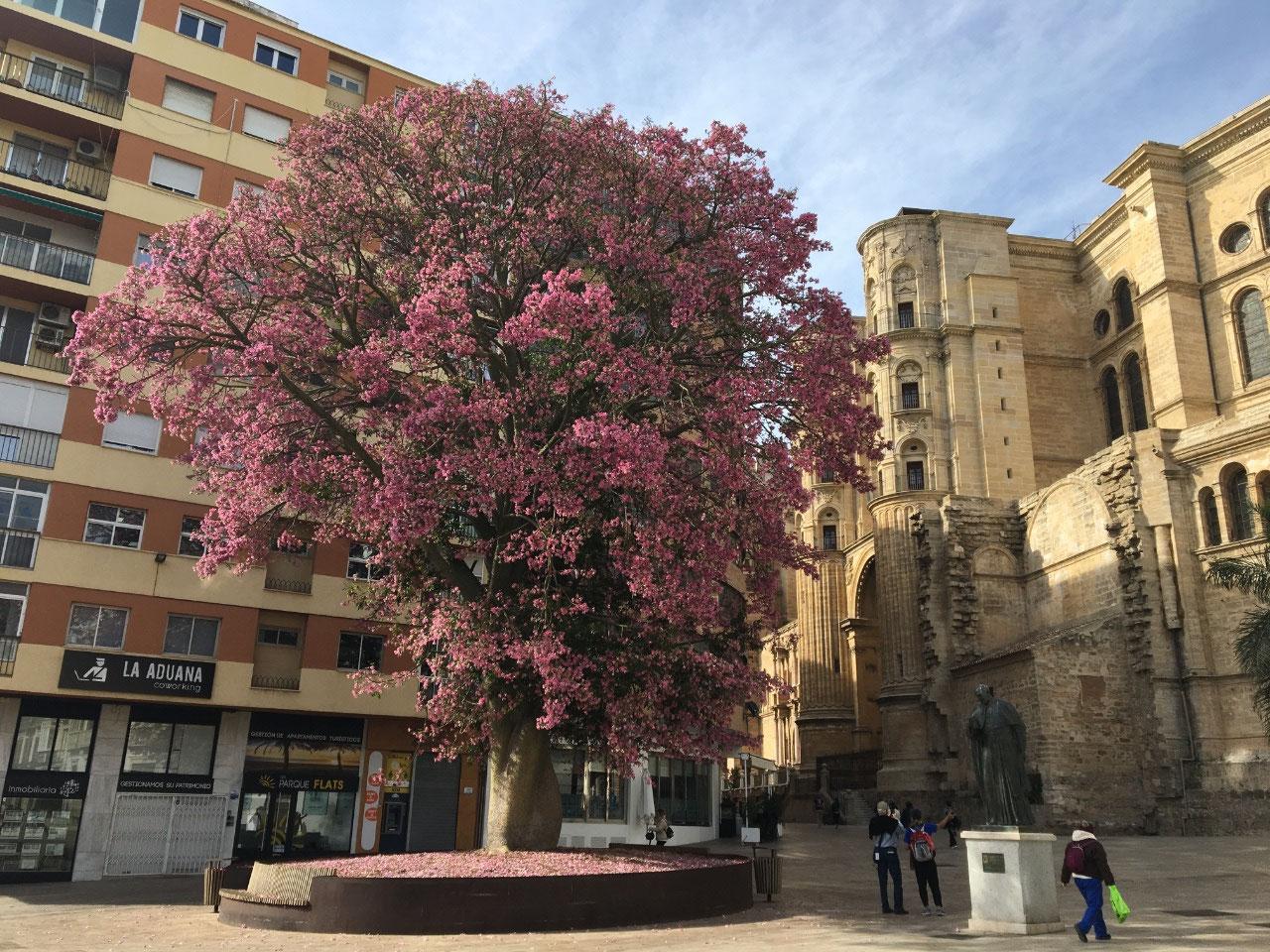 Beautiful tree still in bloom
