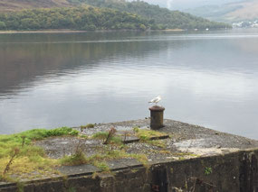Calm water in Fort William today