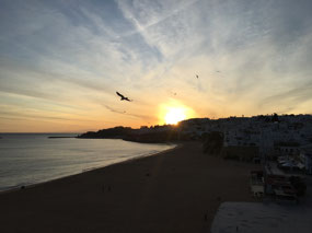 Tonight's sunset with a few seagulls thrown in!
