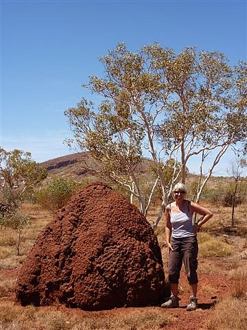 Termite Mound Karinjini