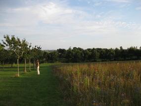 LN dans les champs au château