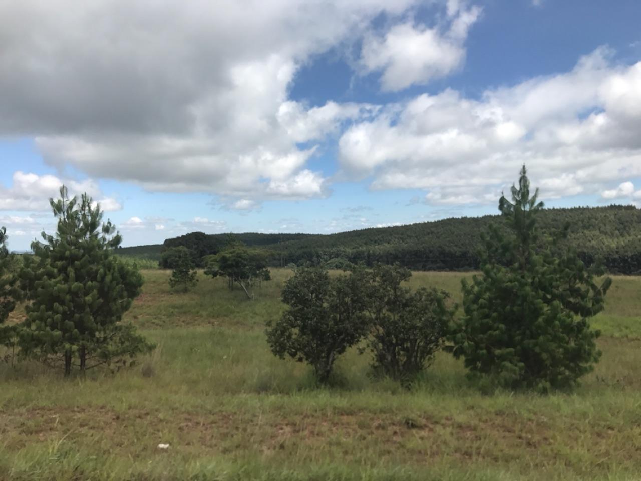 Road to Mzuzu 2