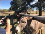 All the donkeys