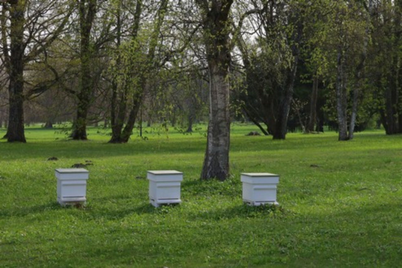 Bee hives outside the Presidential residence